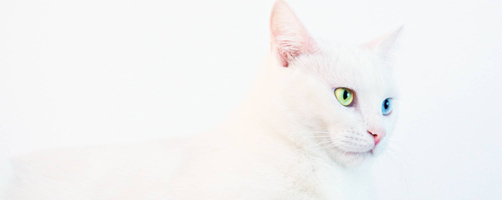 9 Fun and amazing reasons to have a cat savvy