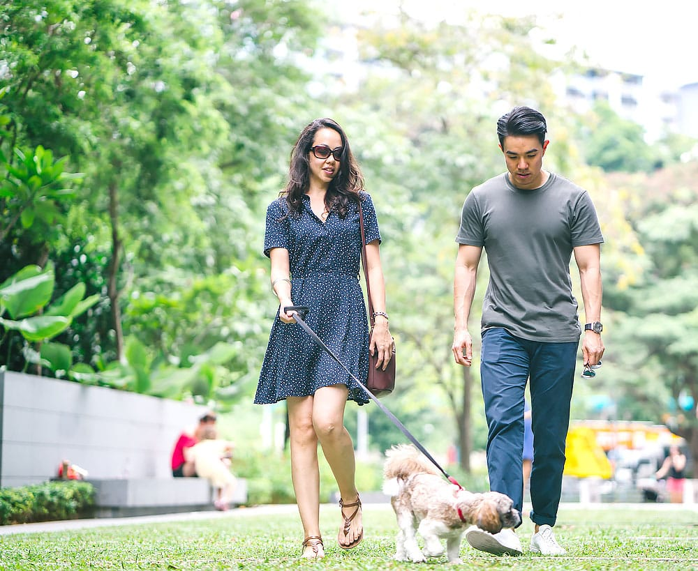 Happy dog in the park Seattle WA with amazing couple